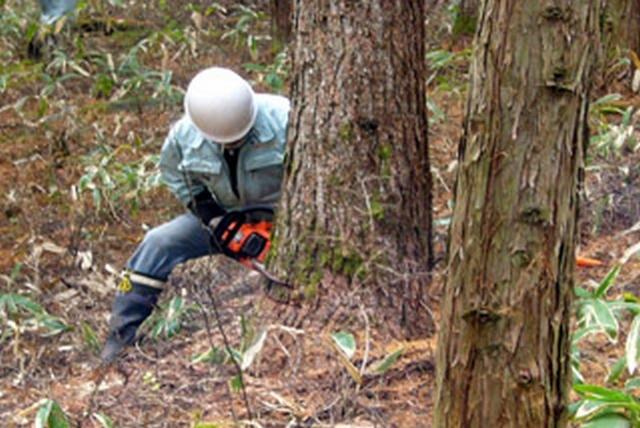 [瀕死の日本の森は今、伐ることが大切です!]の画像