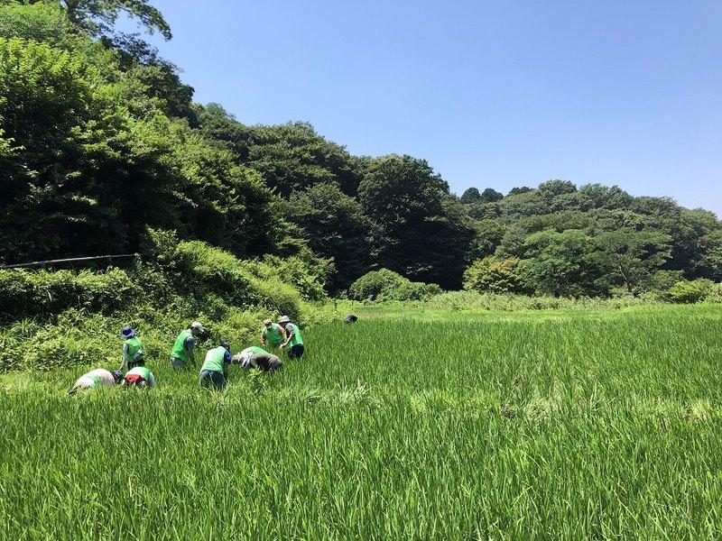 [都市の緑が消える、その前にみんなの手で自然を守ろう。]の画像