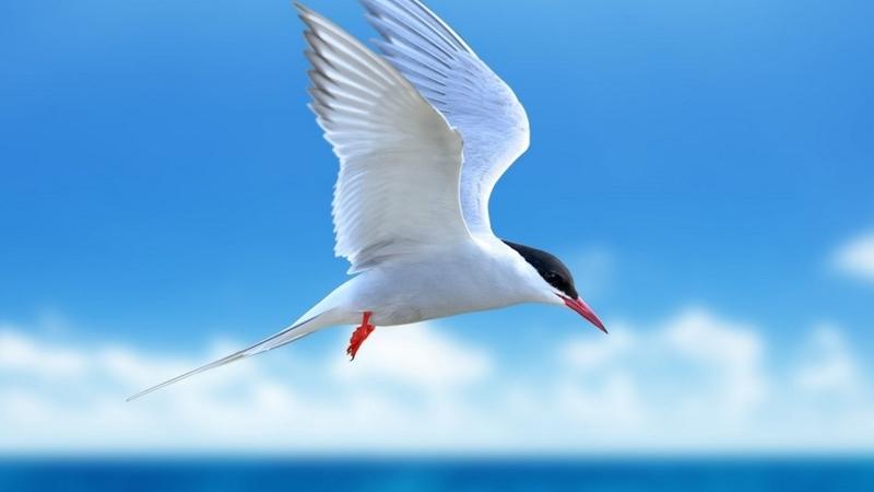 [世界の環境保全にご支援を! 鳥と自然を守り、人々の生活や地球環境も豊かに]の画像