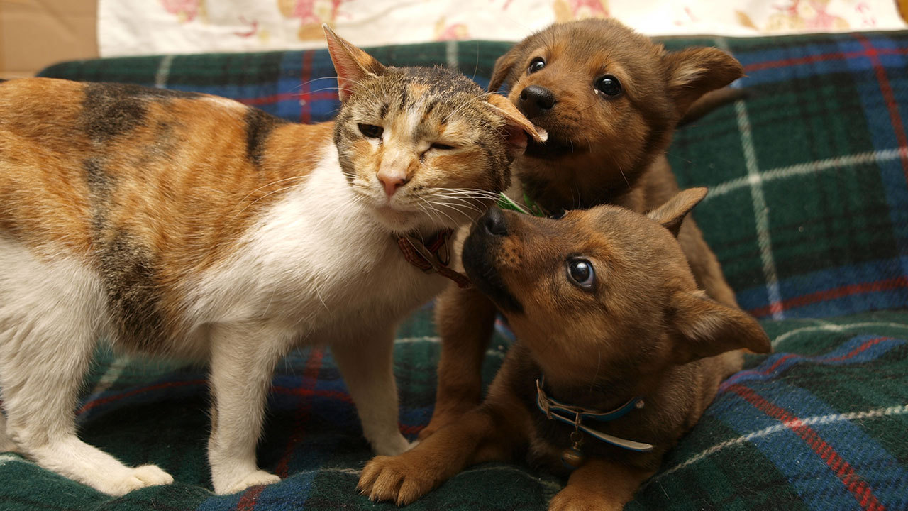 [捨てられた犬や猫たちを救おう]の画像