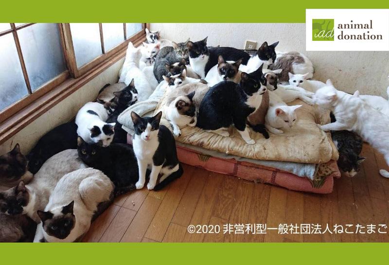 [【コロナ緊急支援基金】多頭飼育崩壊から救いたい! 約500頭分の犬猫のレスキューを支援 (アニマル・ドネーション)]の画像