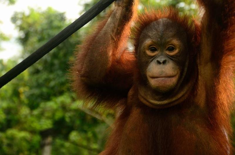[アジアの熱帯林を豊かにしよう!]の画像