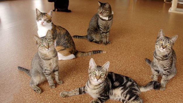[2008年~北海道初の保護猫カフェで北の猫たちを救いたい!]の画像