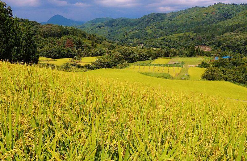 [有機的関係づくりで福島の農業の復興を応援!]の画像