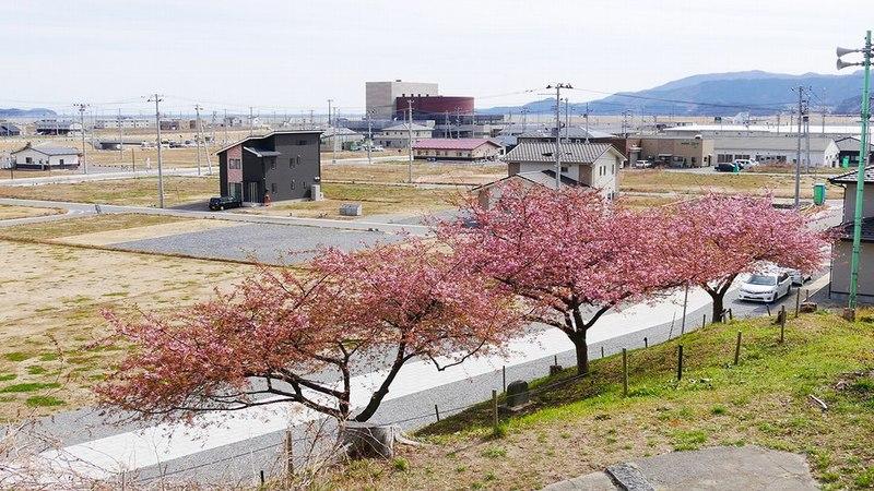 [次の津波から命を守るため、避難のラインを「桜」でつなごう]の画像