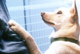 [日本聴導犬協会]の画像