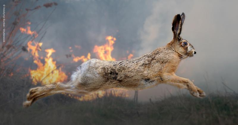 [トルコおよびギリシャの山火事で被害を受けた野生生物のために (WWFジャパン)]の画像