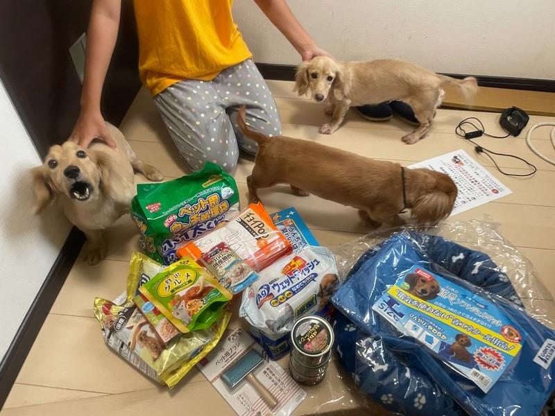 [【緊急支援】令和3年8月豪雨災害 被災地での活動のためにご支援をお願いいたします (日本レスキュー協会)]の画像