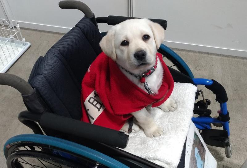 [介助犬・聴導犬の普及と育成支援の募金]の画像