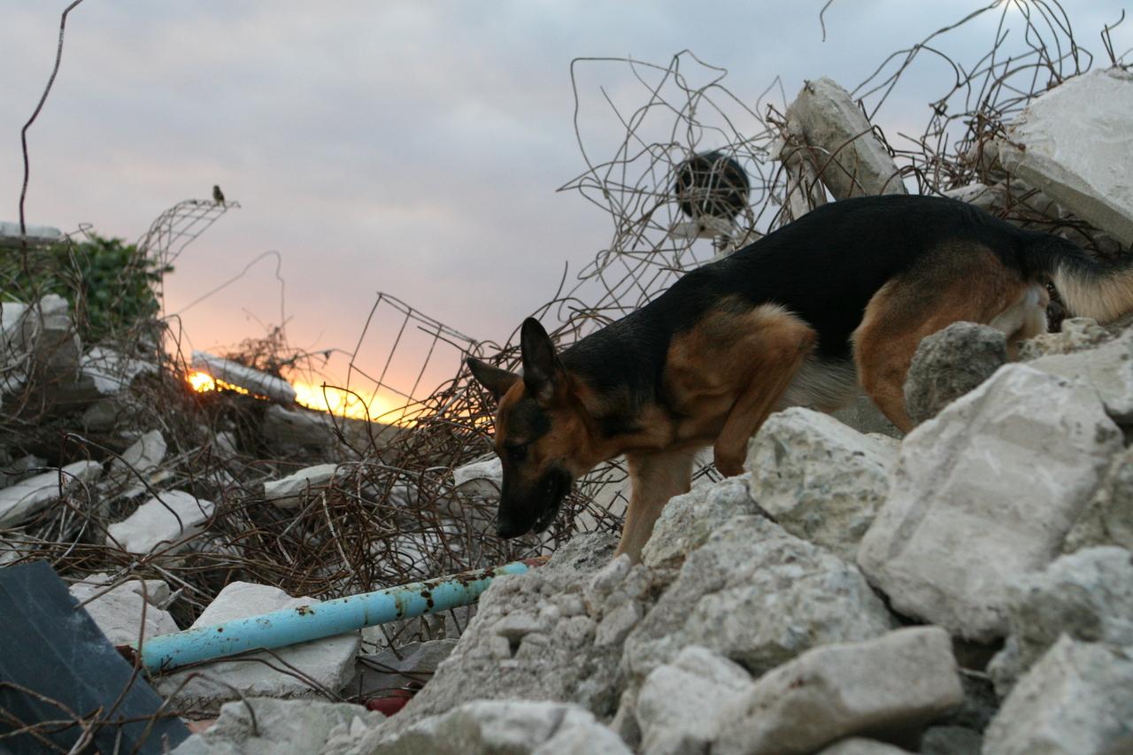 [九州北部豪雨被害緊急募金 災害救助犬派遣のためにご支援をお願いいたします (日本レスキュー協会)]の画像