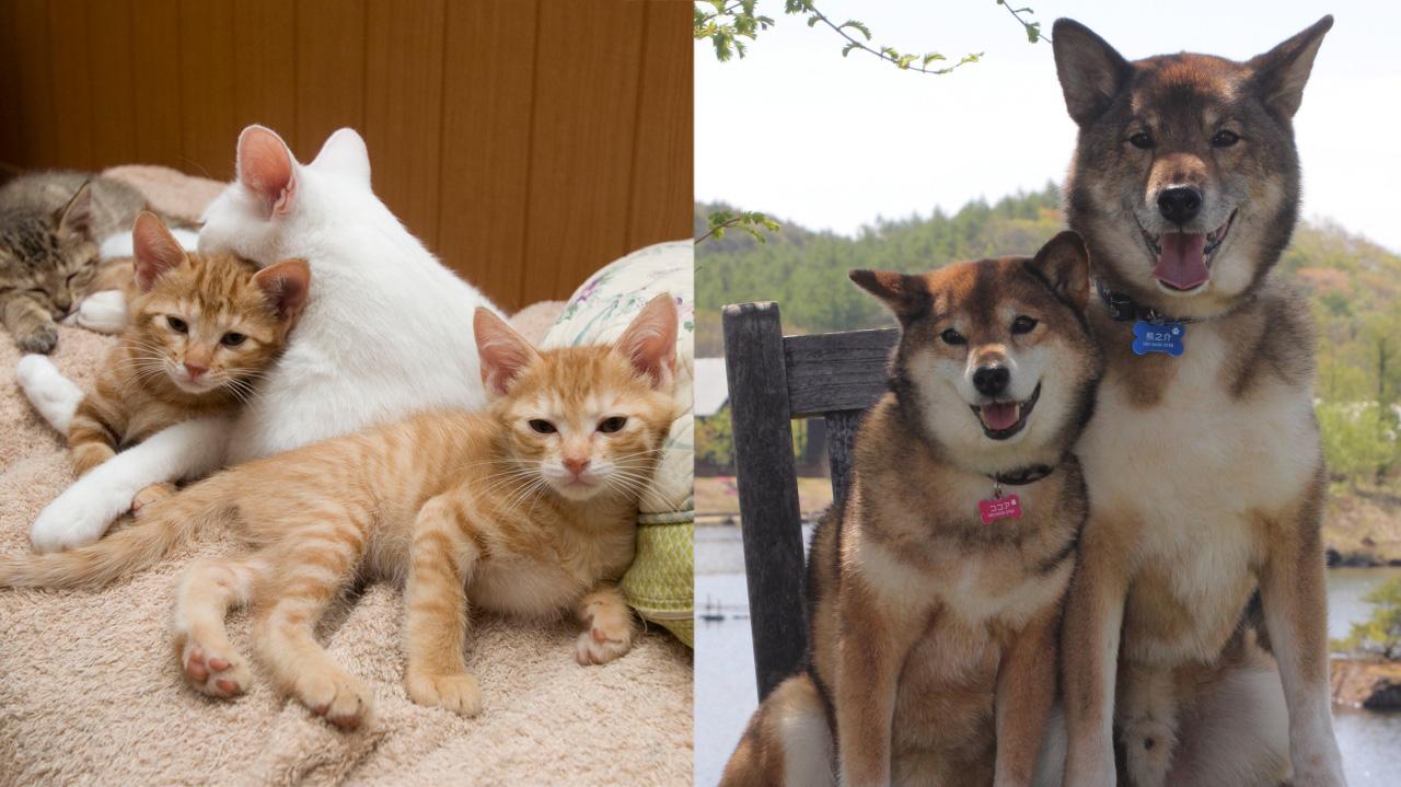 [人も動物も共に幸せに生きる社会を目指して]の画像
