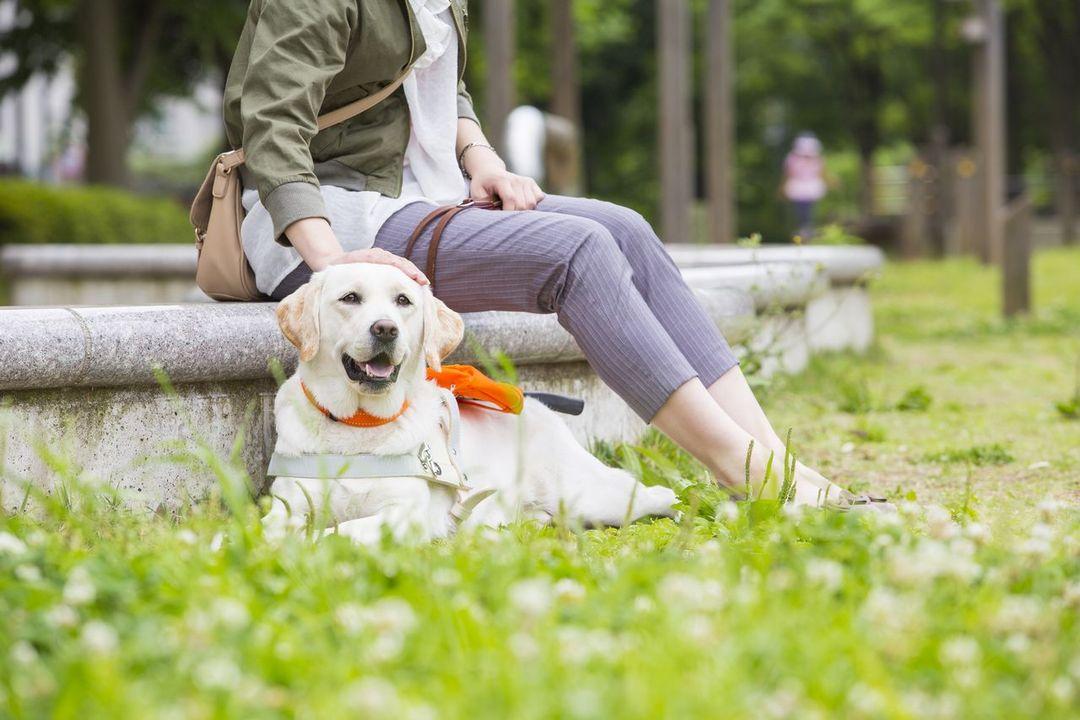 [2人6脚 人と盲導犬が笑顔で歩く社会へ。 ~公益財団法人日本盲導犬協会~]の画像